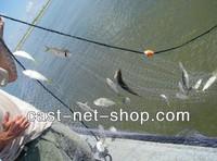 Рыболовная сеть 5 ,   61 x 2,5 /; : 7x7cm
