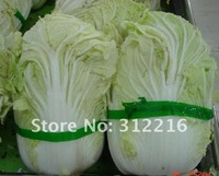 Whole sale High quality Chinese cabbage, South Korea high quality kimchi shipping fee The buyer to pay