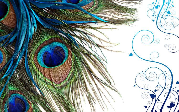 Peacock Feather Desktop Wallpaper 021 T2iqjiXdtaXXXXXXXX
