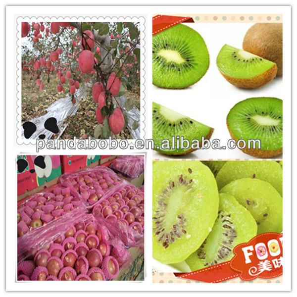 high quality fresh fuji apple fruit