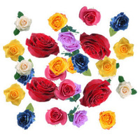 Карликовое дерево 28 Kinds Colors Rose Flower Seeds, EACH COLOR 200 Seeds, Total OF 5600 Rose Flower Seeds,  GIFT SEEDS
