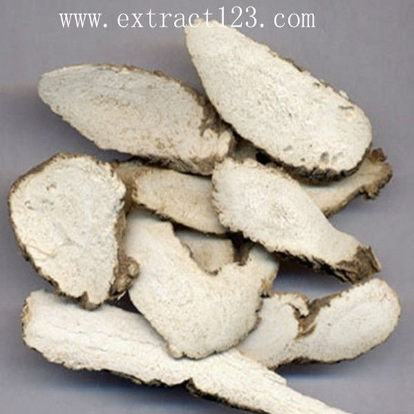Top Quality natural Black Cohosh Extract