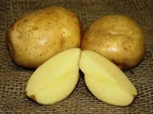 Certified HALAL/ GAP 2014 Crop FARM FRESH POTATO-Table Potato, Fries Potato