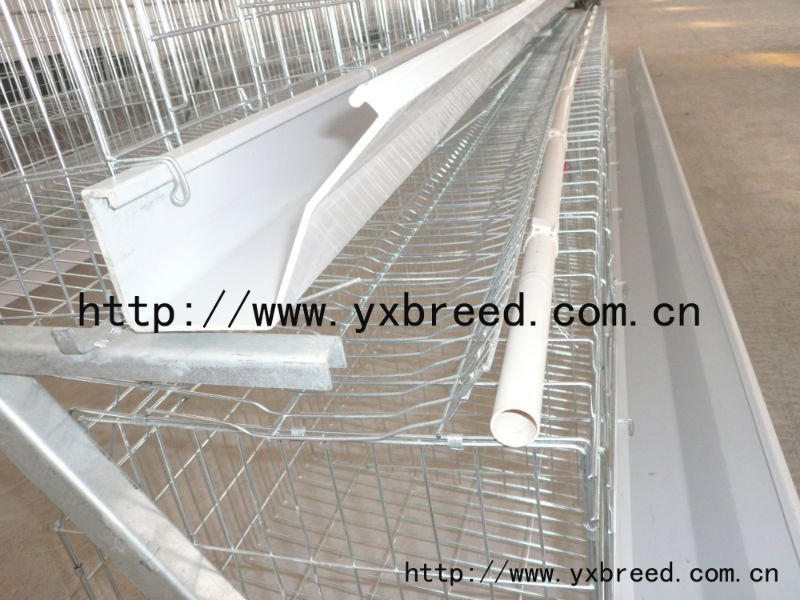 Tanzania chicken farm poultry cage with auto water system