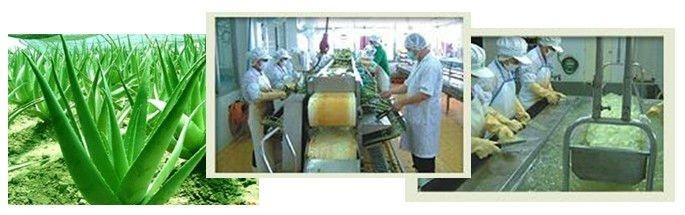Aloe Vera Flavor Milk
