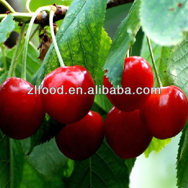 import export Quality products Acerola Cherry Fruit Powder
