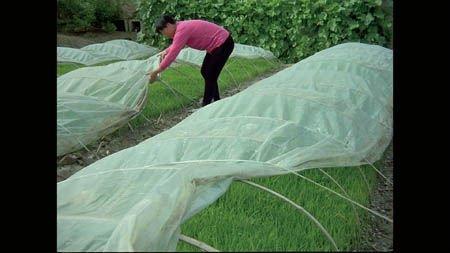 Agricoltura pp tessuto non tessuto, agricoltura tessuto non tessuto di copertura, agricoltura ...