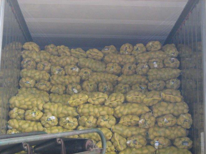 2013 Fresh Potato