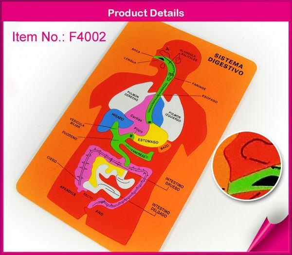 Rompecabezas del sistema digestivo - Imagui
