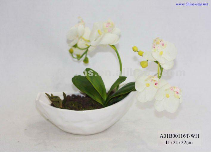 Giallo orchidee phalaenopsisin ceramica vaso nero fiori e - Vaso in gres per orchidee ...