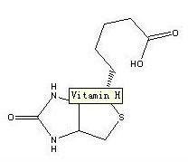 Vitamin H 5.jpg