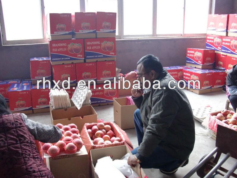 wholesale prices fresh apple fruit,fruit market prices fresh apple