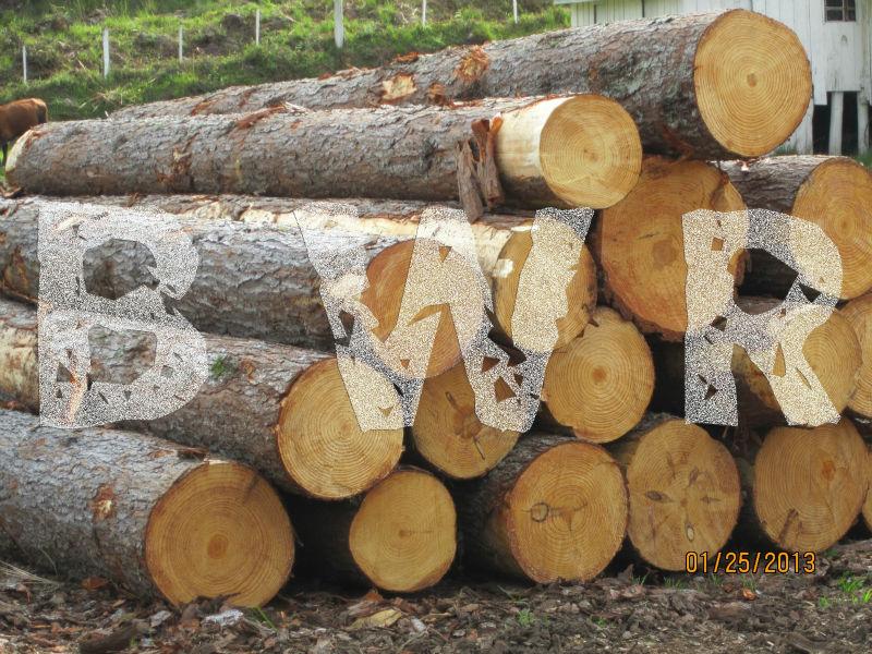 Pine Logs - Large Diameter 6 - BWR - small
