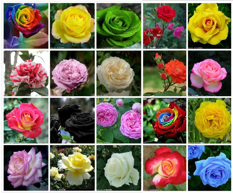 Семена разных цветов на