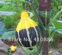 Free Shipping  of Smallfruit bottle gourd Seeds * 8 Seeds per Bag original package
