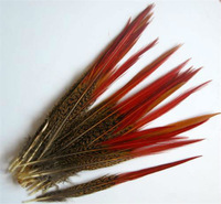 Перья Hot! 50 PCS natural pheasant tail feathers Natural Color 8-10 inche