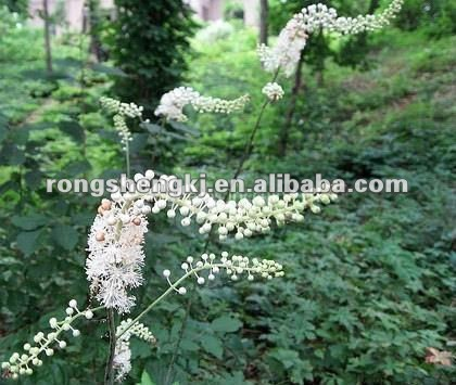 Black Cohosh Plants Extract,Natural Black Cohosh Extracts