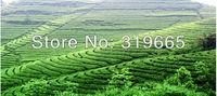 Чай молочный улун 2013 Anxi Tieguanyin Tea Organic Tea 250g +secret gift