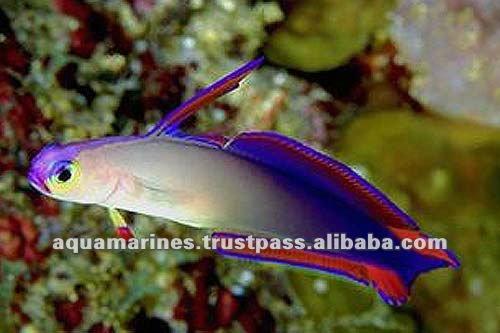 Go Back > Pix For > Rare Tropical Fish