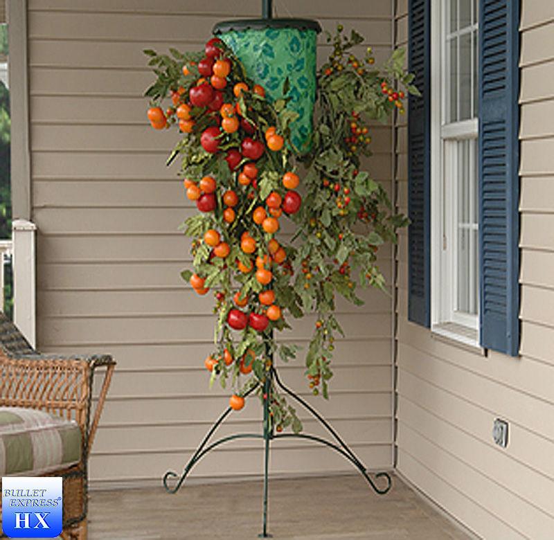 Можно ли вырастить на балконе помидоры-черри?.