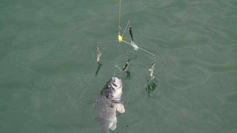 условия для ловли рыбы