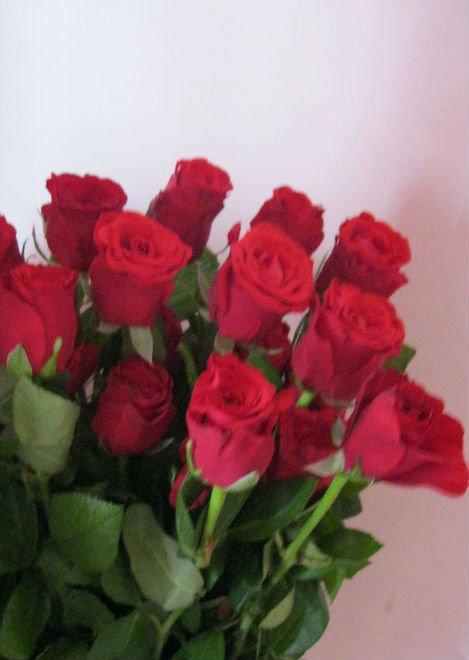 Fresh Roses Fresh Cut Red Color Rose