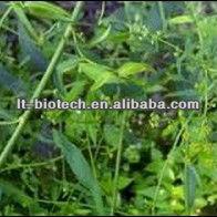 Anti-Rheumatism Gastrodin CAS 62499-27-8