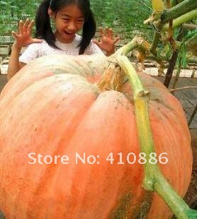 15  pieces(3 bags) pumpkins seeds ,this brand(Huaxianzi)  can be mixed ,5 bags will be $1.2 for each