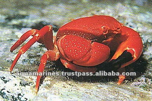 59 cat_marine_crabs1011a_l