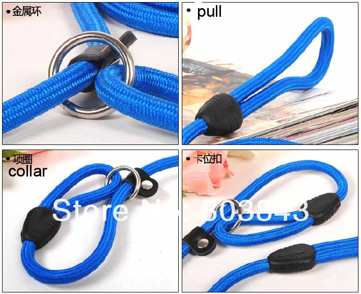 pet dog collar leash.jpg