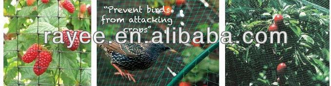 anti bird