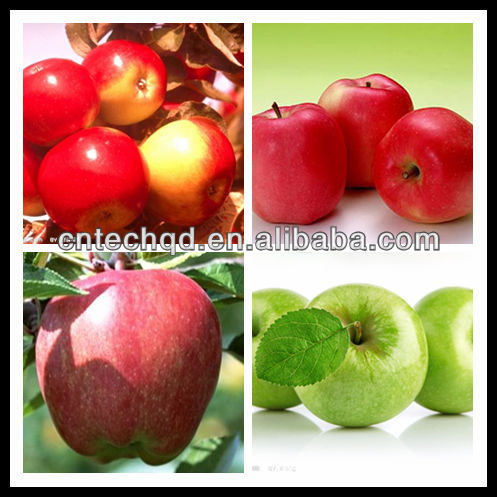 High quality fuji apple exporter in china