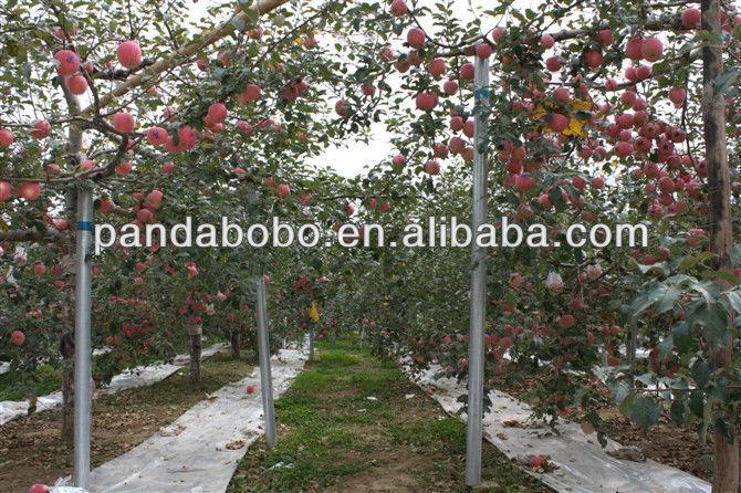 2013 factory direct sale plastic fruit tray huaniu apple fruit
