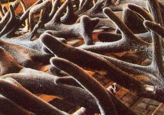 Chinese Deer Antler Velvet Deer Antler Velvet/ lu Rong/