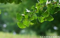 Карликовое дерево Goodgoods , 50 , 2014