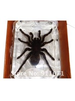 Man-made amber, insect embed/wrapped in colourless clear amber,  free shipping craft souvenir