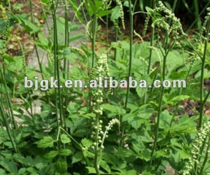 Black cohosh extract,Black Cohosh,84776-26-1