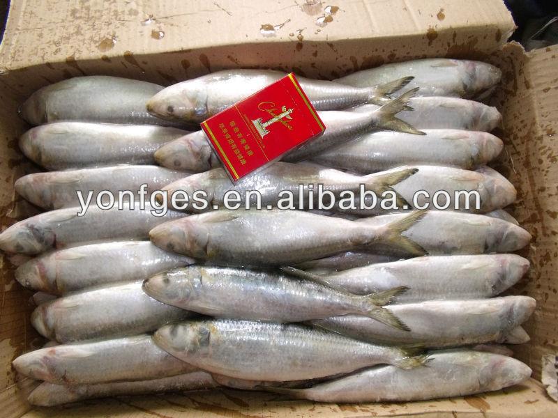 Wholesale frozen sardine