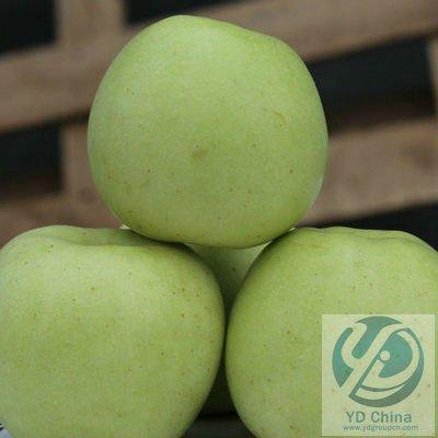 YDA-002 Jinshuai Apple