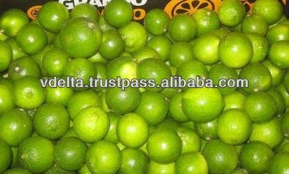 Fresh Green Lemon 2014 - Good price and high quality