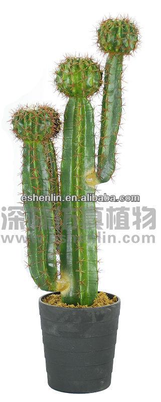 Indoor cactus trees cactus potted plant buy large cactus indoor