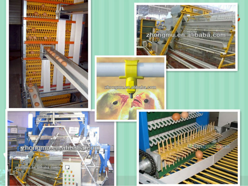 High Quality Automatic Broiler Chicken Cage System Buy