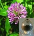 ISO&Kosher&Halal Natural Red Clover Extract