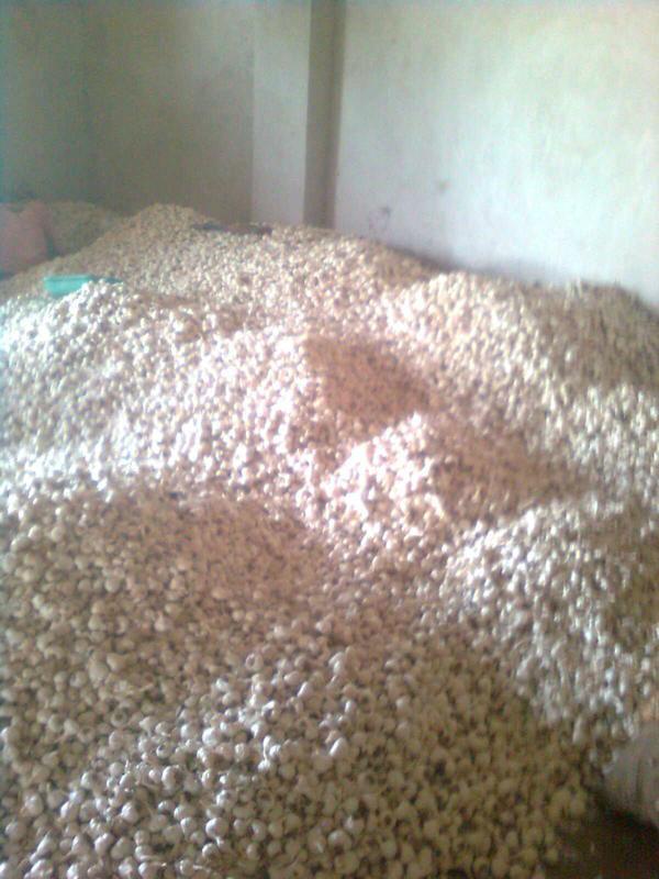 bulk natural garlic