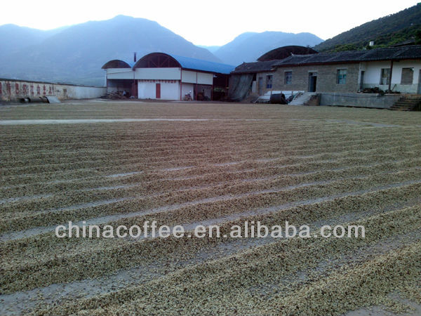 China Arabica Green Coffee Bean Grade A