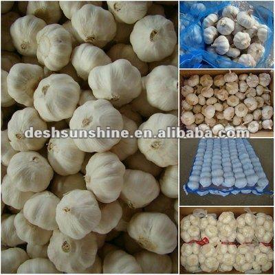 fresh natural garlic with best price
