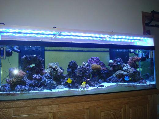Marine fish tank maintenance 6ft 6ft marine fish tank for 6ft fish tank