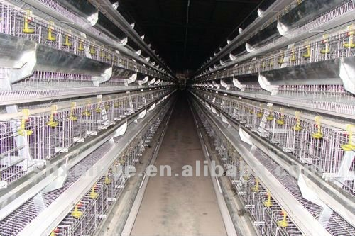 9TLXD 4200 automatic a type layer chicken cage of poultry equipment