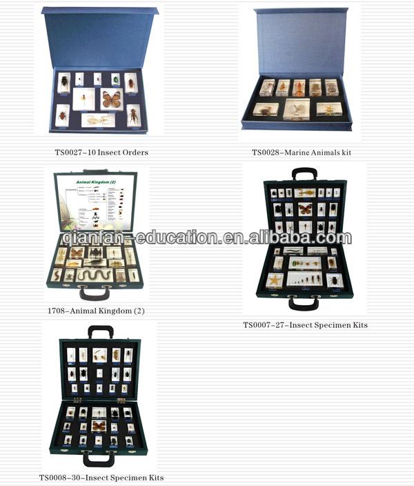 Kits 1.jpg