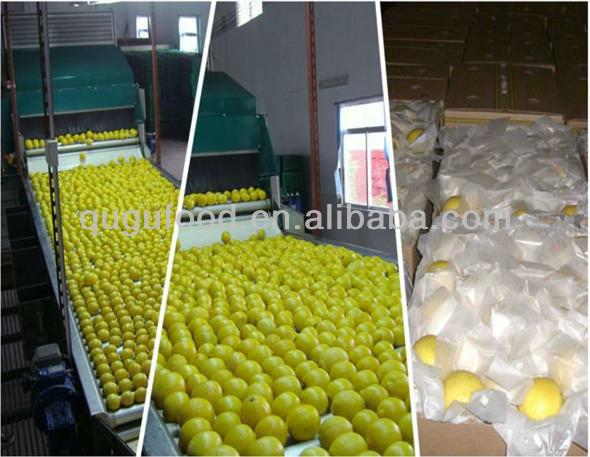 Good Quality Fresh Chinese Lemon
